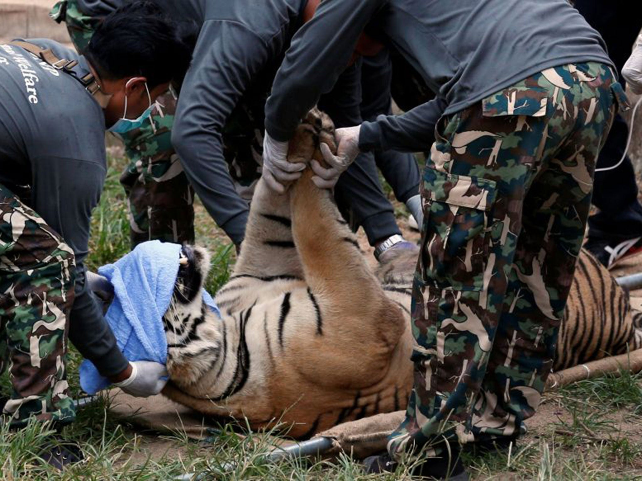 Thailand Tiger Temple: Buddhist monk caught fleeing temple with tiger skins and fangs | The Independentindependent_brand_ident_LOGOUntitled