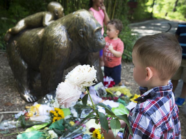 A boy brings flowers to put beside a statue of a gorilla at the Cincinnati Zoo following Harambe's death at the weekend