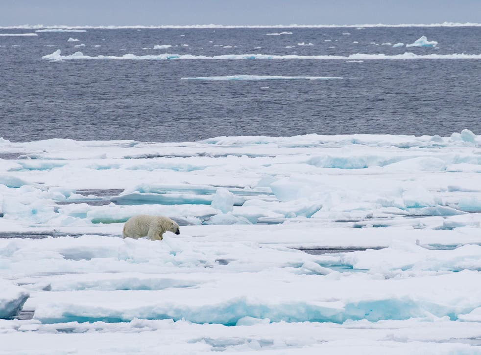 Melting Arctic sea ice poses a major threat to polar bears' survival