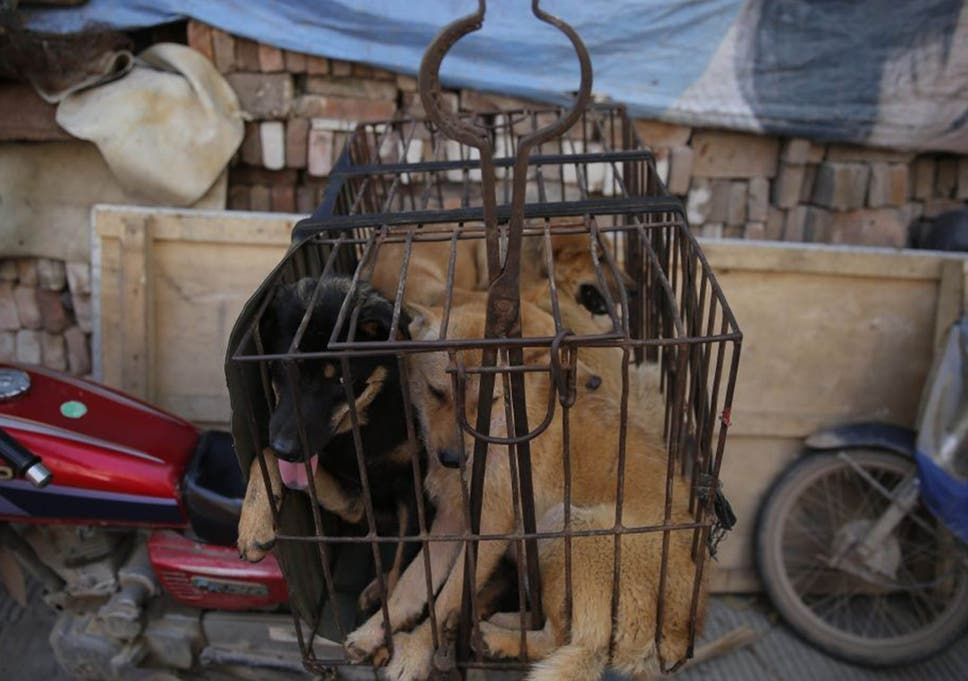 Yulin Dog Meat Festival 2016: 10,000 dogs to be killed and