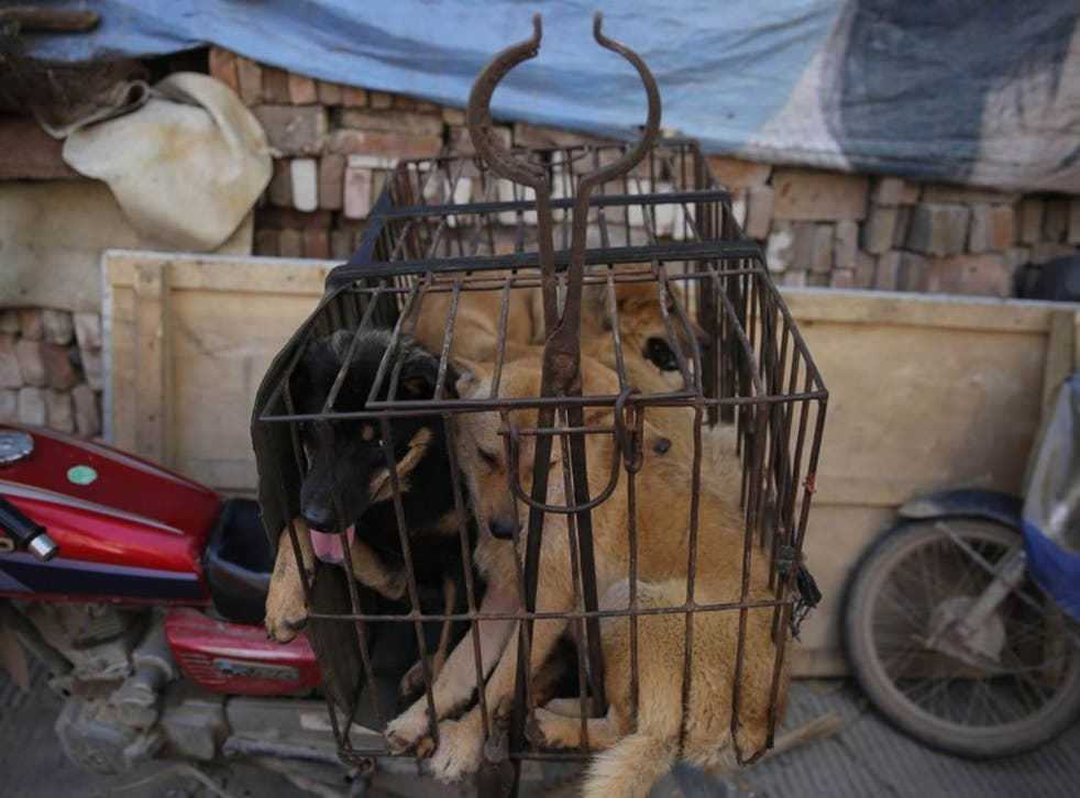 Dogs in a cage for sale at a market in Yulin city, southern China's Guangxi province, 21 June 2016
