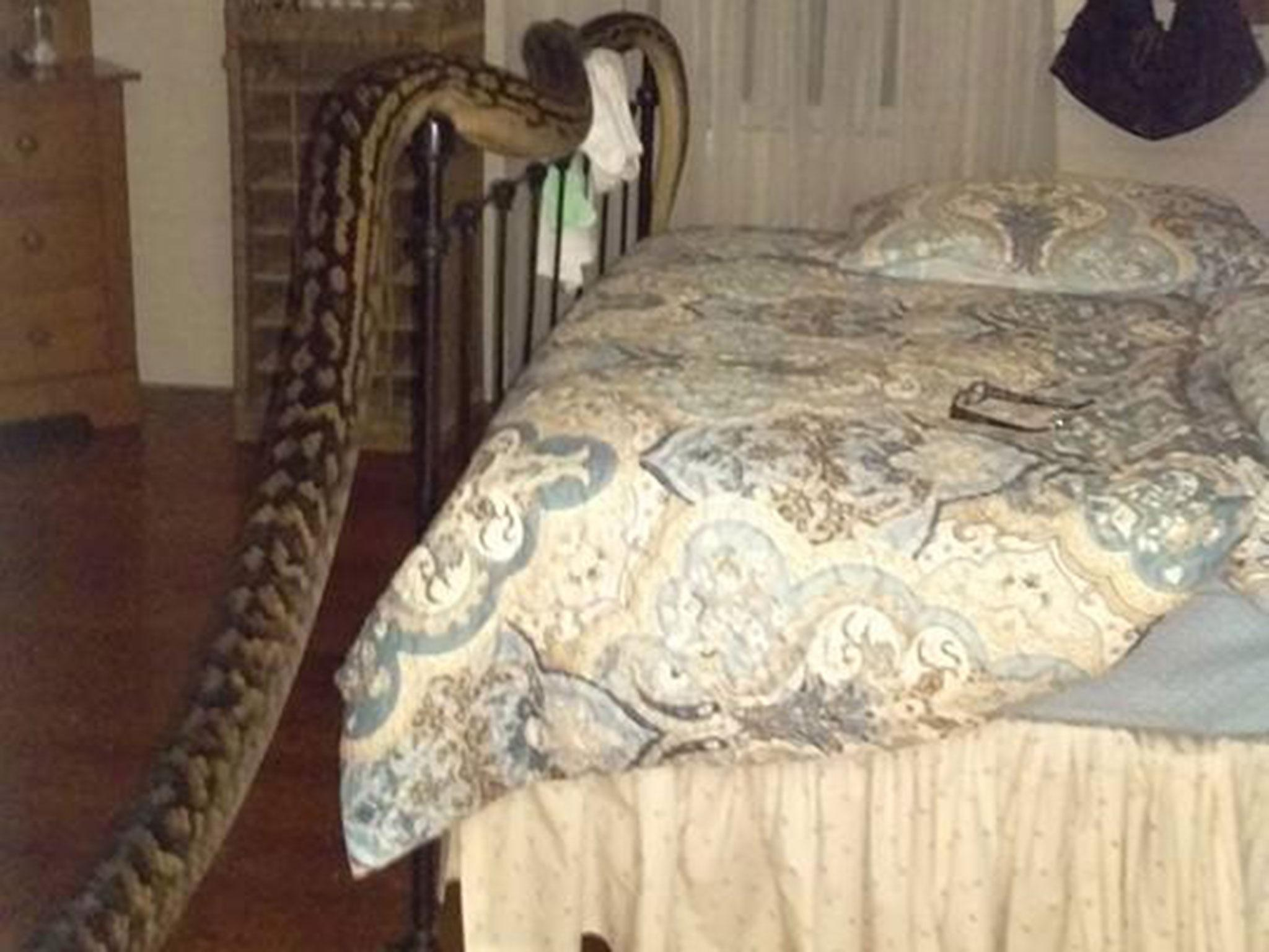 Monster Python Invades Queensland Home In Middle Of The