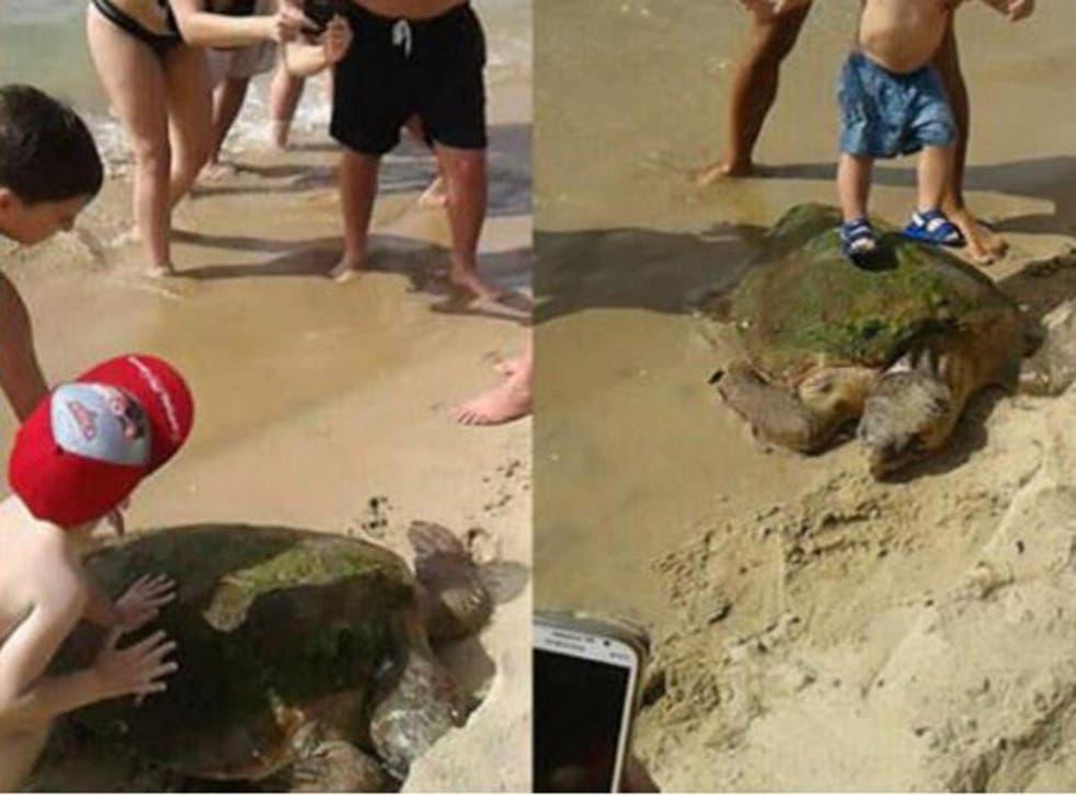 People posed standing on the sea turtle - causing head trauma