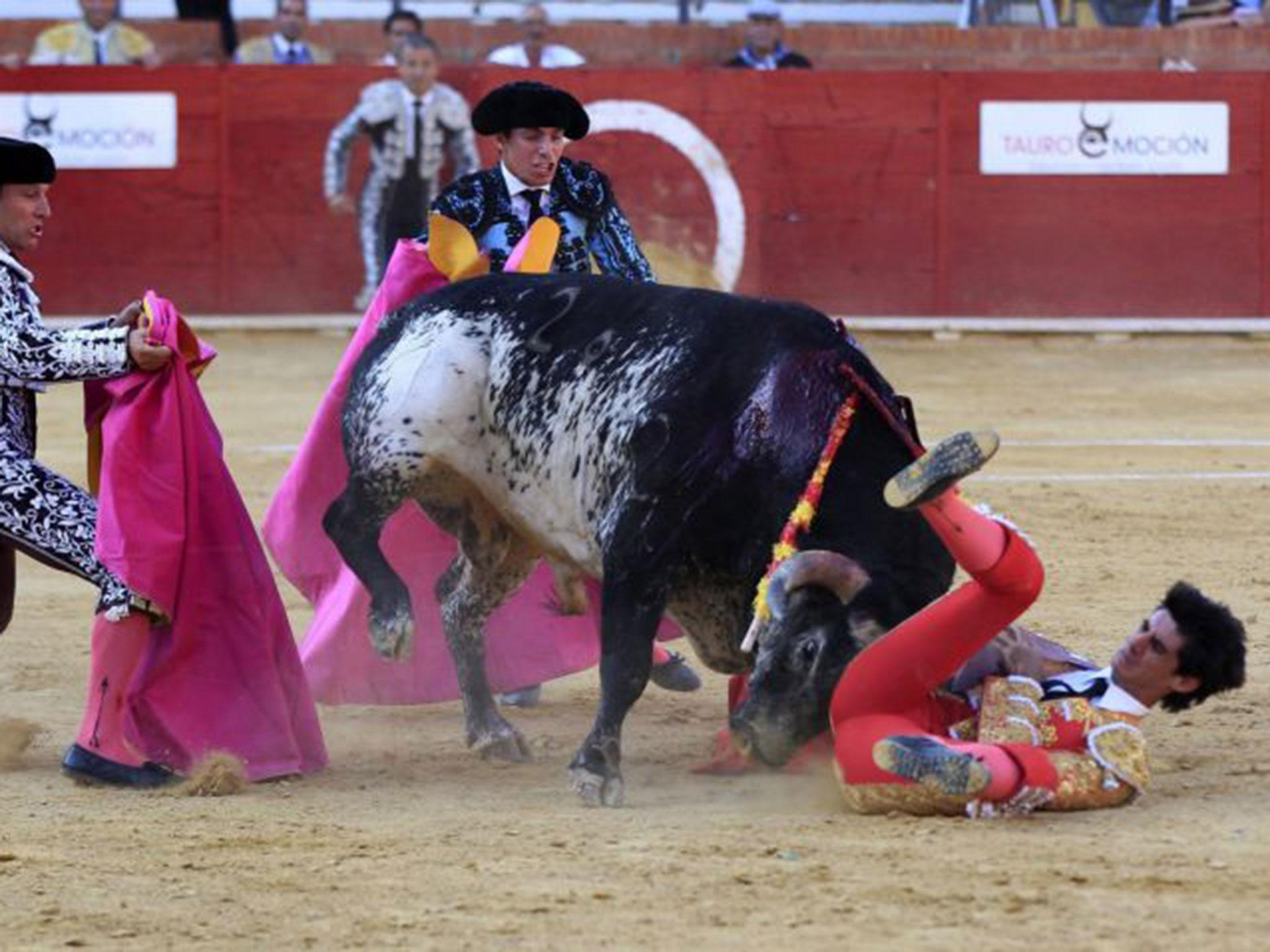 Outrage as Spanish Constitutional court overturns bullfighting ban rh