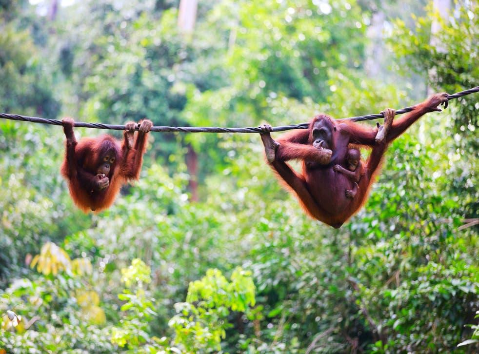 A trip to Borneo has risen by £90 per person