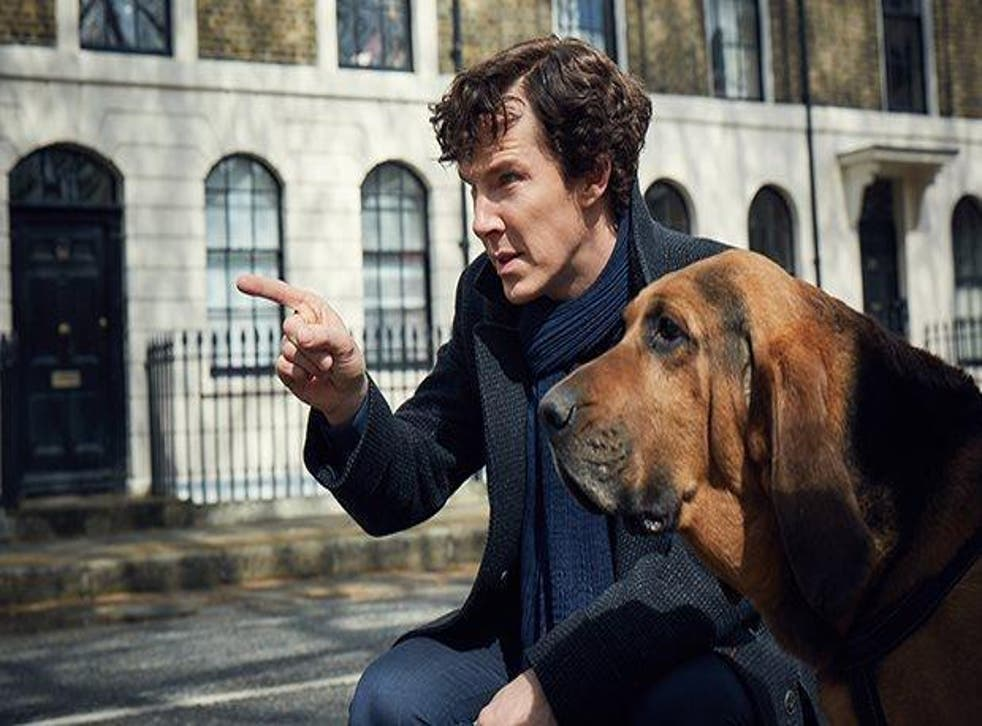 Cumberbatch will be back for another series of the BBC detective drama, expected early next year