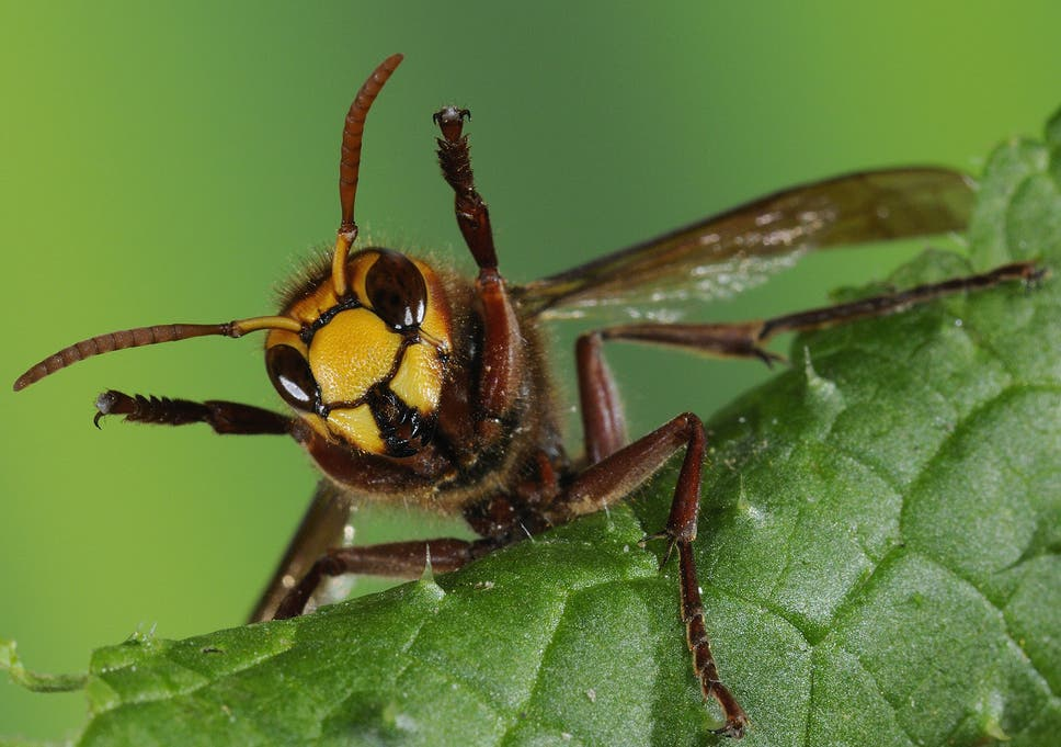 A world without wasps would be catastrophic for ecosystems