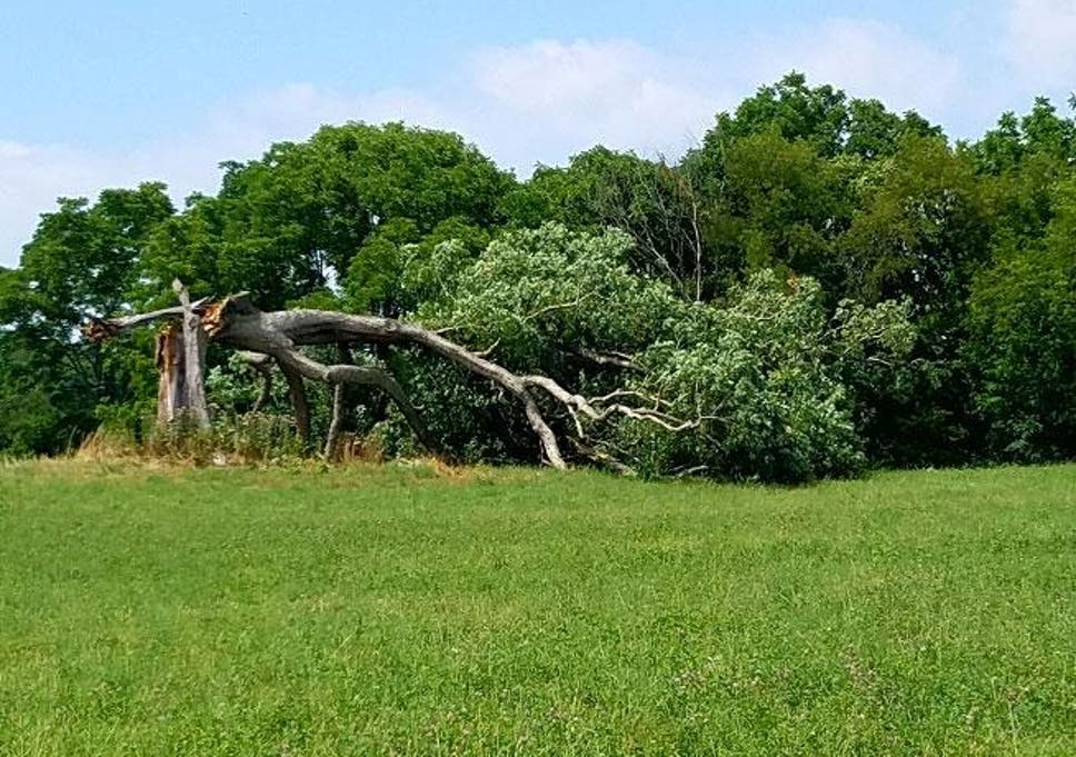 Shawshank Redemption: Famous oak tree from 1994 film toppled