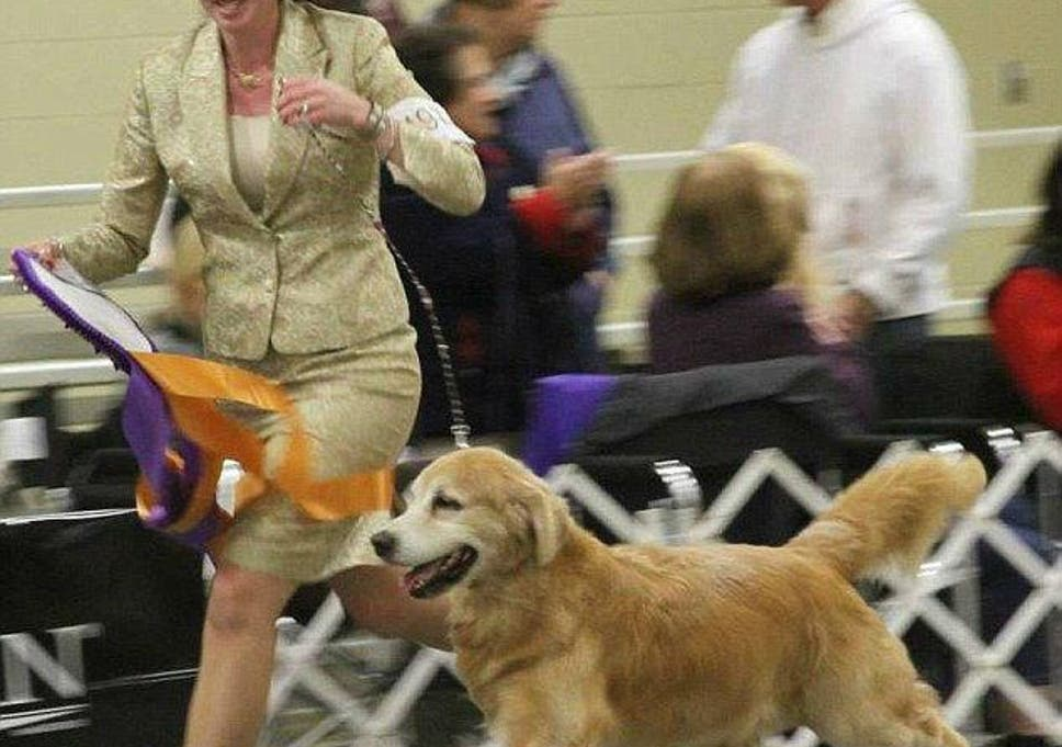Fourteen Show Dogs Dead In Indiana After Truck Air Conditioning