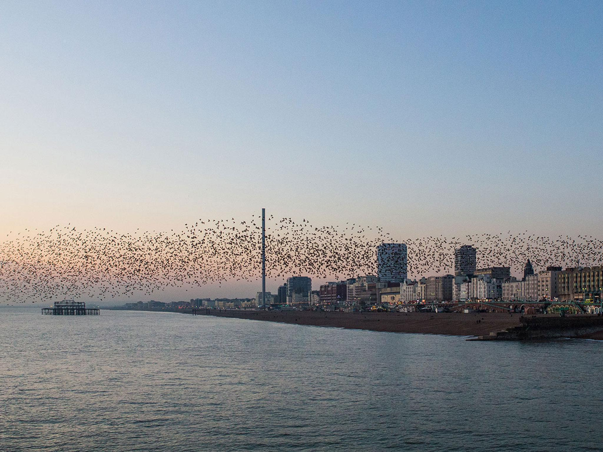 Brighton i360: The 500ft tower set to change the eccentric city by ...