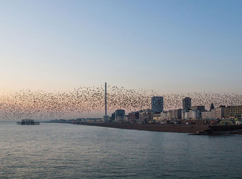 Starlings circle the i360 tower and the wreck of the West Pier on Brighton seafront