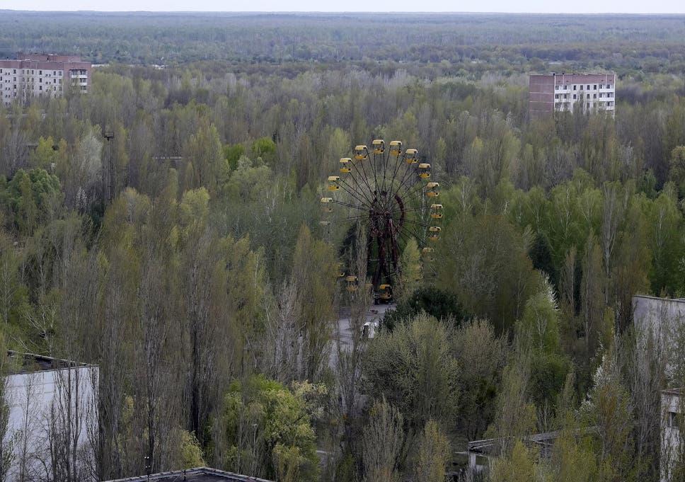 Resultado de imagen para Chernobyl forest
