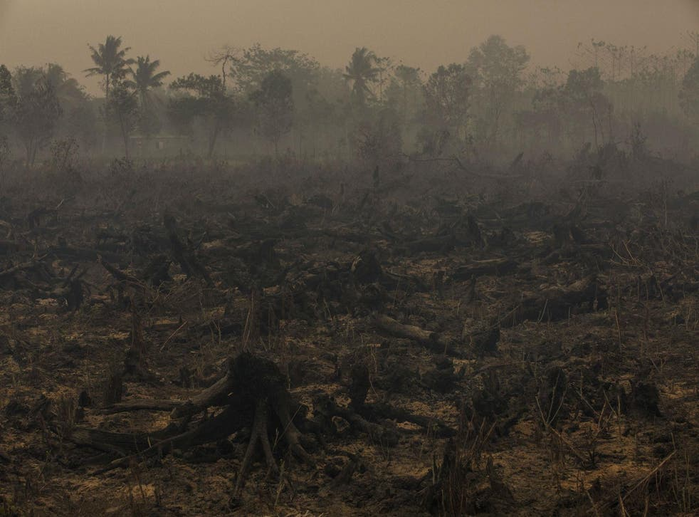 Devastating forest fires left much of Indonesia blanketed by choking smoke last year