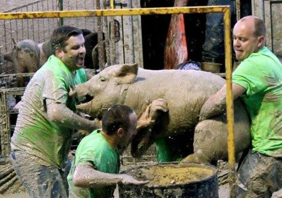 Sex pig wrestling