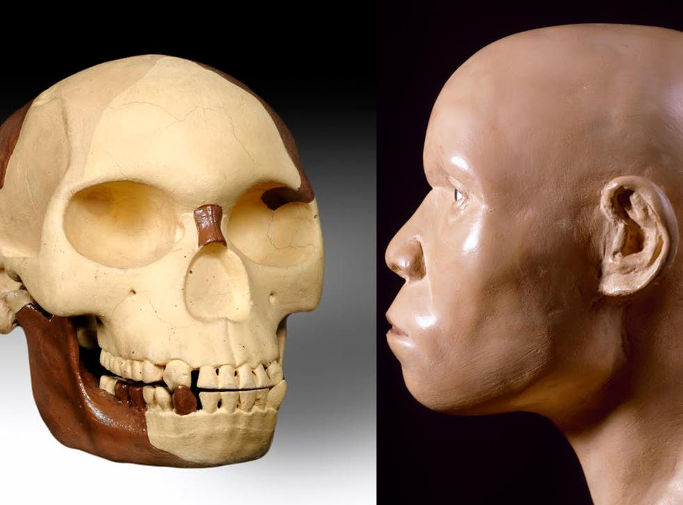 A reconstruction of the remains of the so-called Piltdown Man