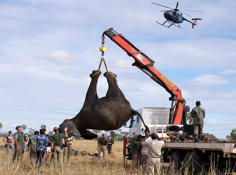 A groundbreaking project to rehome 500 elephants meant tranquilising and transporting the animals on huge trucks. While it might look jolting, our writer found this to be an incredibly considerate conservation project