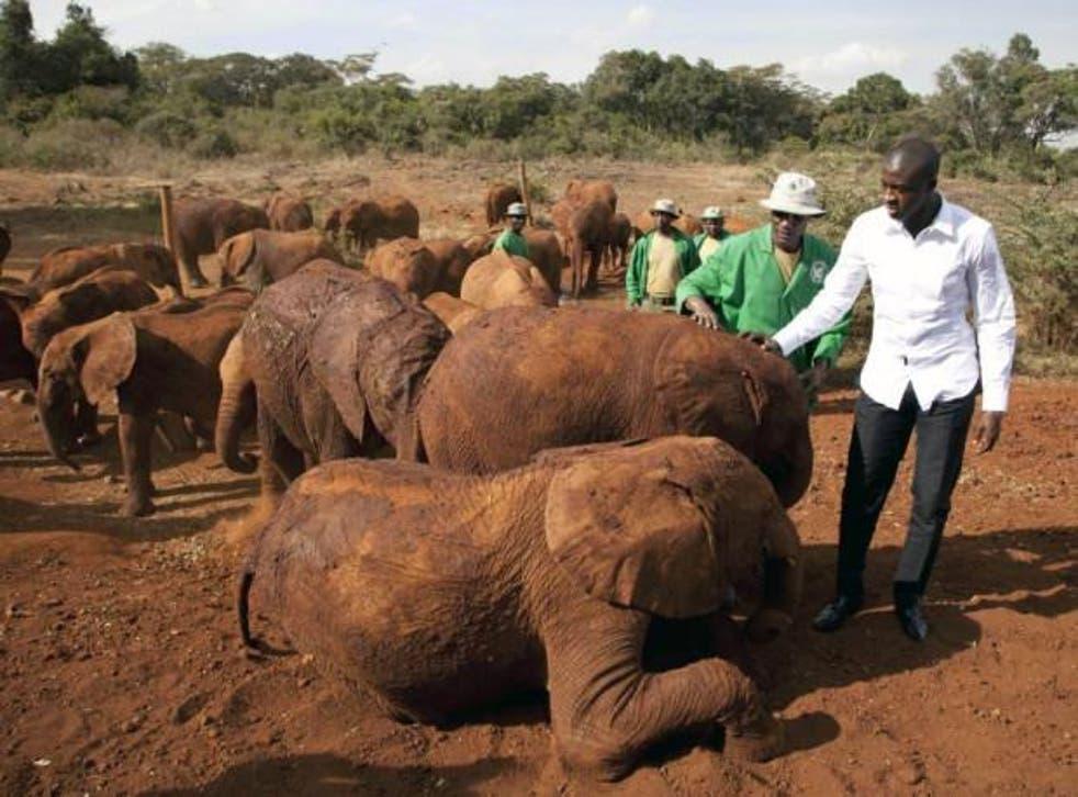 Yaya Toure meeting baby elephants in Kenya