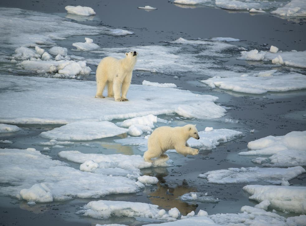 Passengers on a voyage to the Arctic will often spot polar bears from their boat