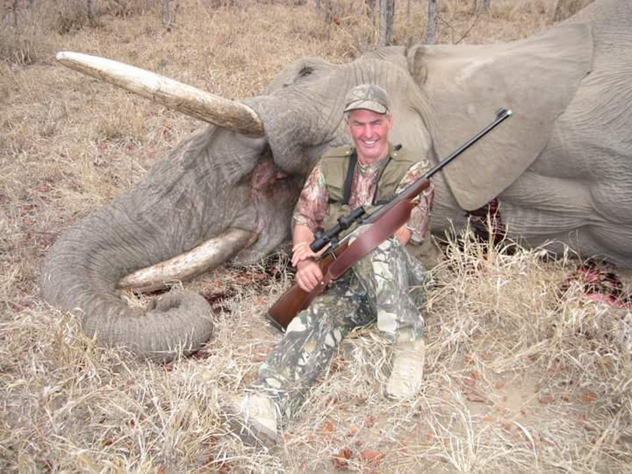 The Zebra Insurance >> Outrage over photos of UK hunter posing with dead elephant and zebra | The Independent
