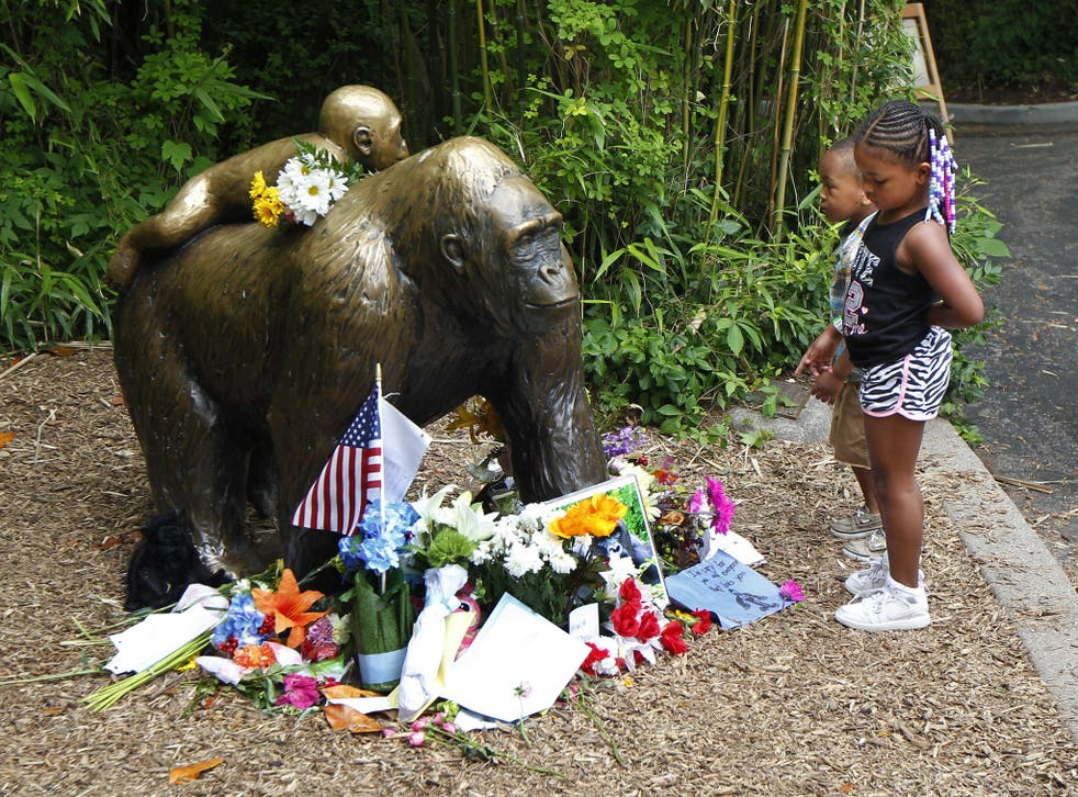 Visitors pay tribute to the gorilla who officials were forced to kill after a three-year-old boy fell into his enclosure