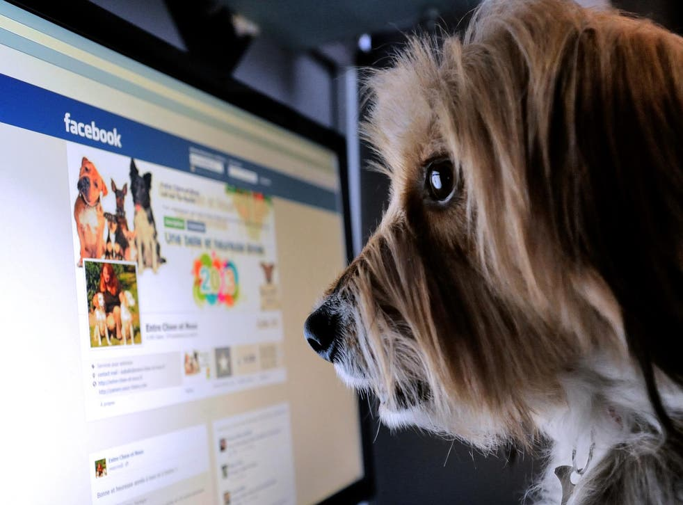 A dog stands in front of a computer screen with a facebook page opened on it, on January 4, 2013 in Lille, Northern France