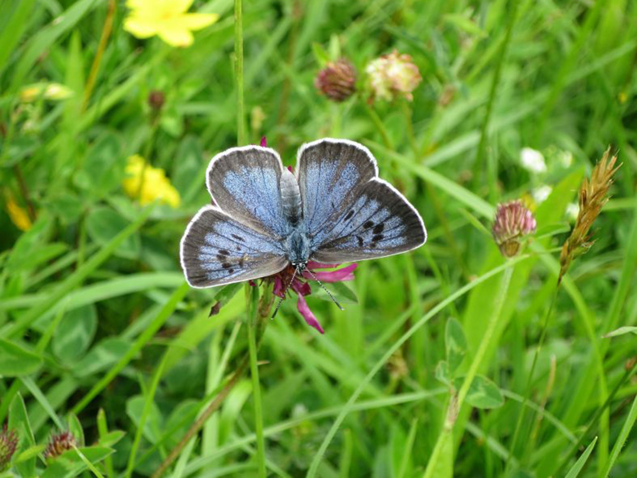 disastrous 2016 shows butterflies are u0027failing to cope u0027 with