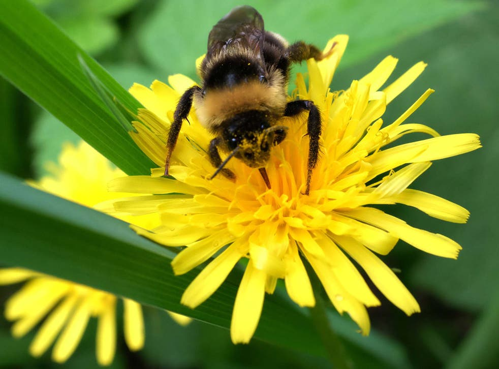 The decline in bee populations is 'a major environmental concern', says Greenpeace