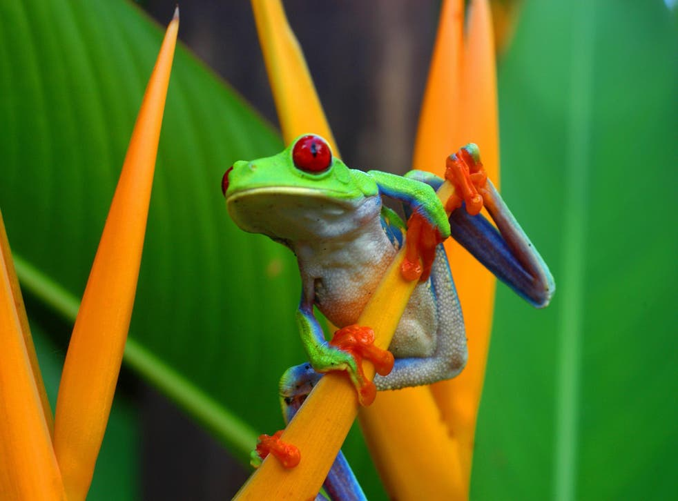Costa Rica has the highest density of biodiversity of any country in the world, and is home to around 500,000 different species