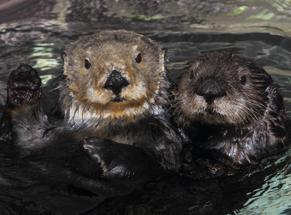 <em>Randy Wilder/Monterey Bay Aquarium</em>