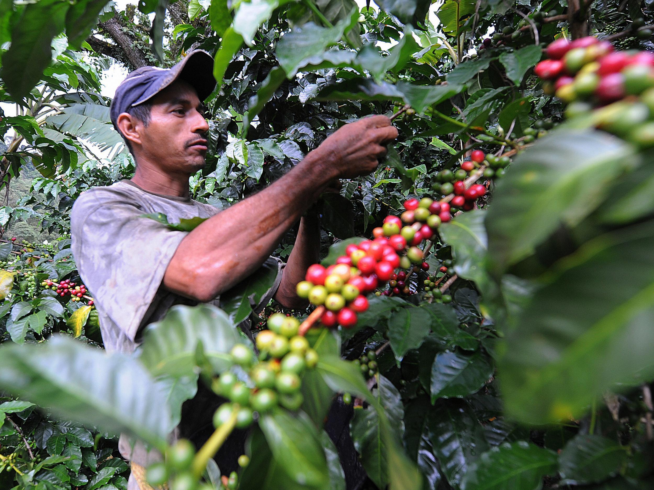 Burundi Coffee Farms