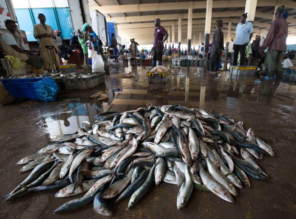 Fish landings are seen on the floor of Joal market