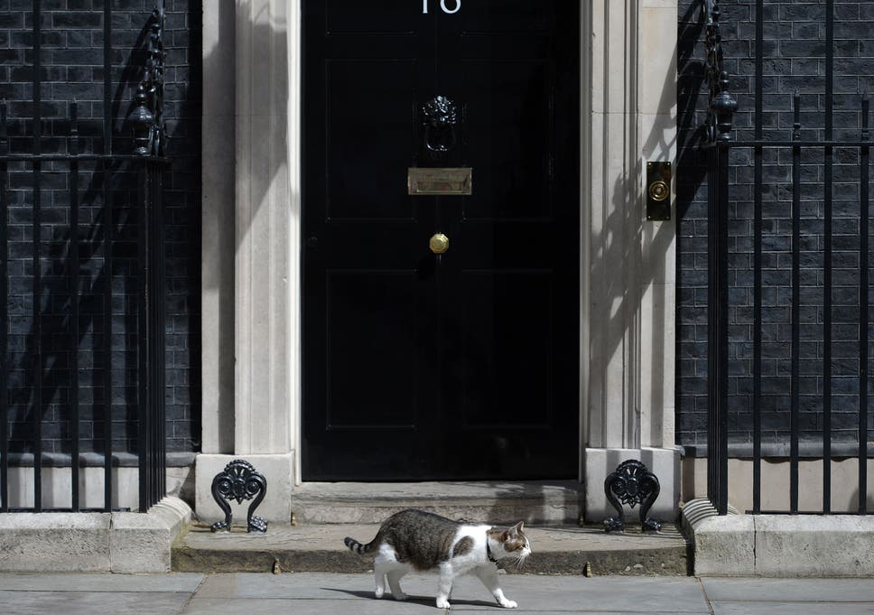 b6c59a60a29 Larry the cat: Staff left to pay injured Downing Street feline's veterinary  bills after fight with Palmerston