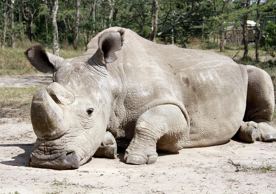 World Rhino Day in Kenya: new hope for one of the planet's