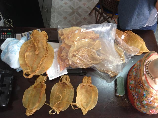 Totoaba swim bladders are offered for sale in Shantou, China