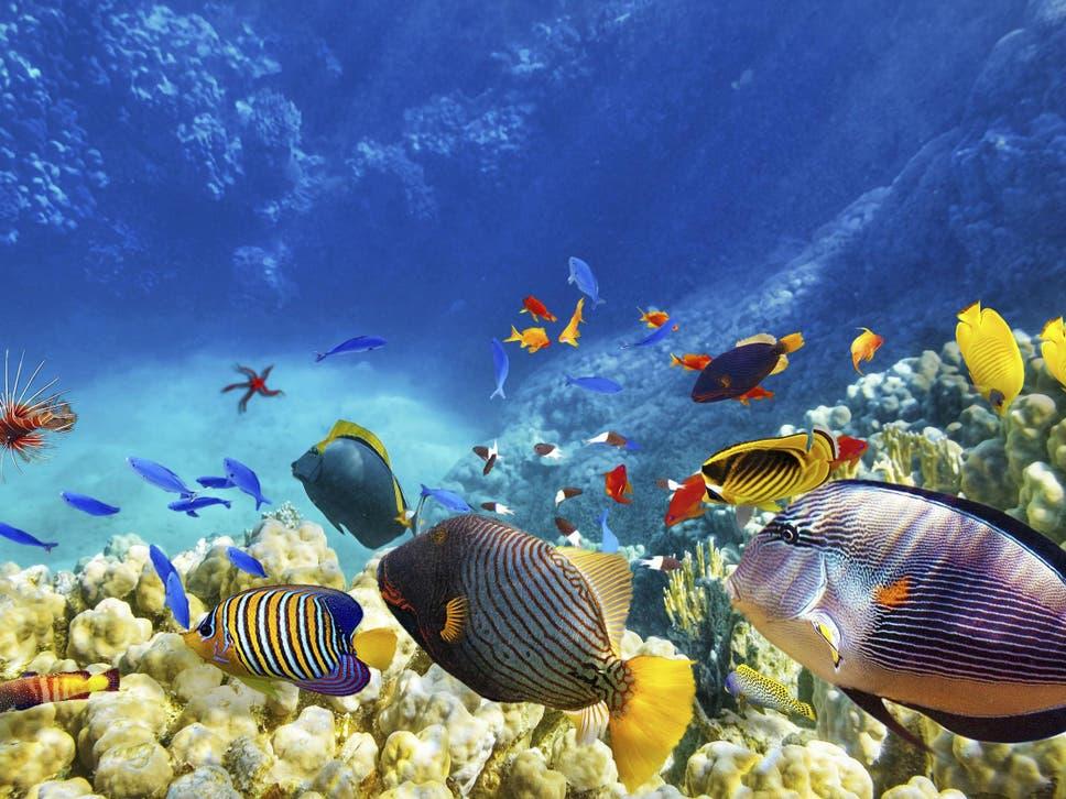 under the sea fish recorded singing dawn choruses off australia