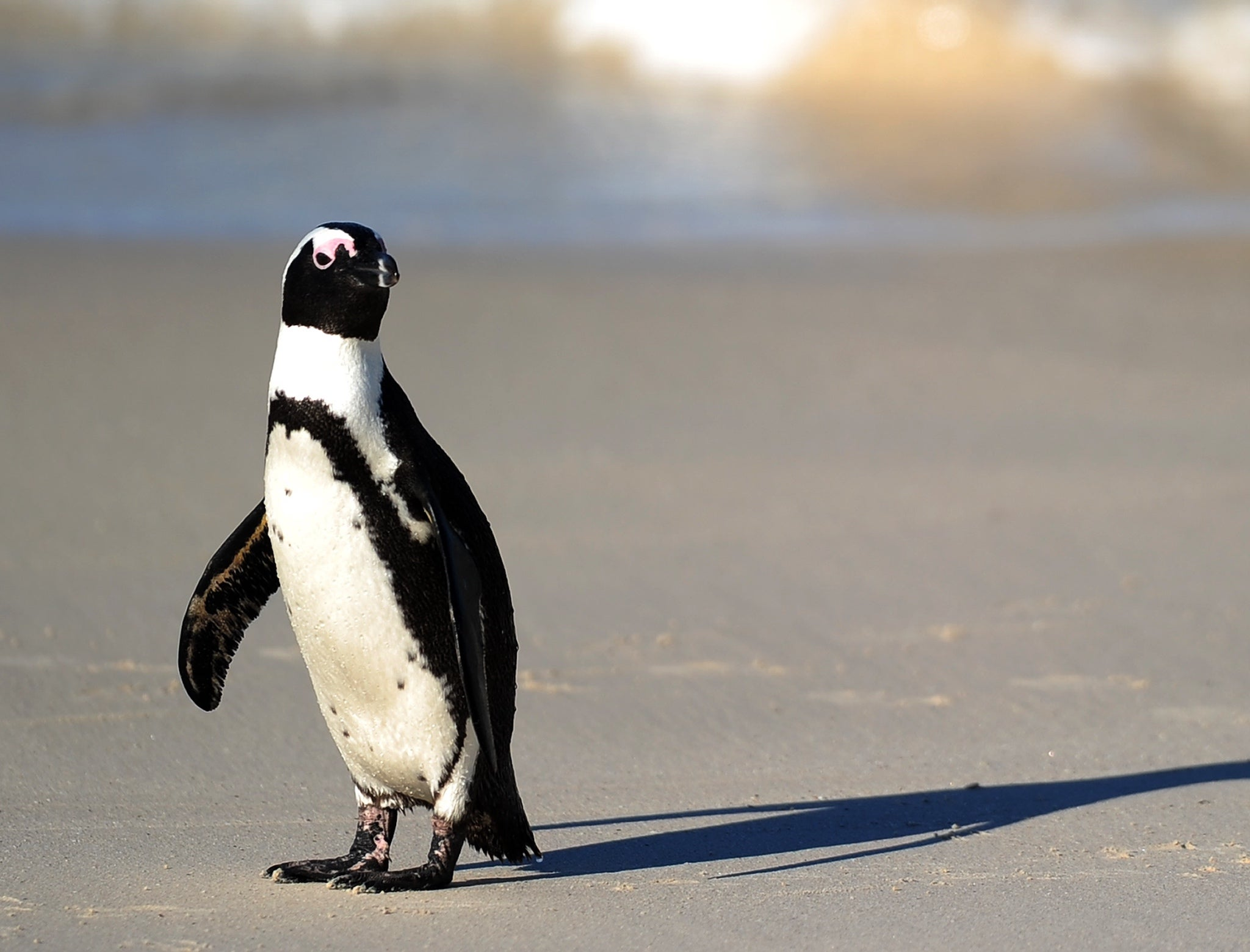 Endangered Penguin Rescued By Students From South