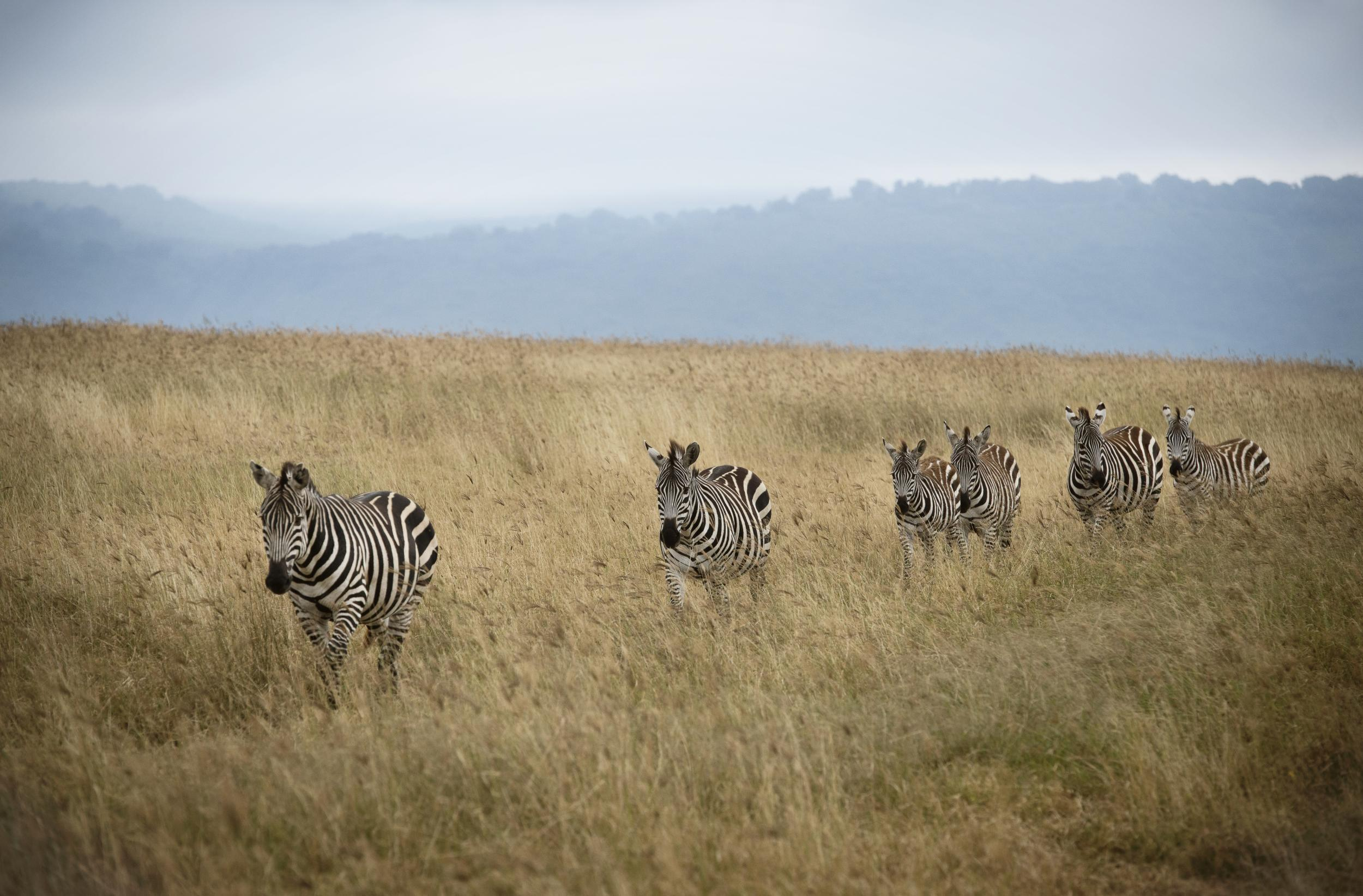 Sluts in Ngorongoro