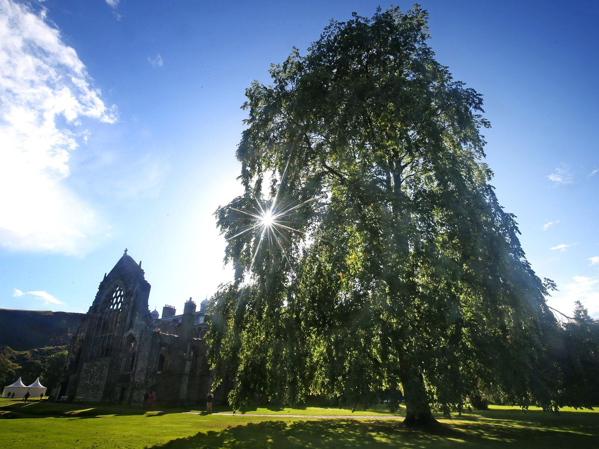 extinct u0027 species of tree found growing in queen u0027s garden the
