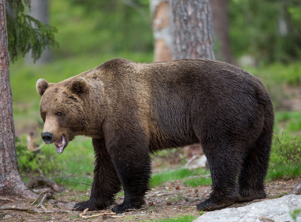 Since 2007, 2,374 bears have been shot by hunters in Romania