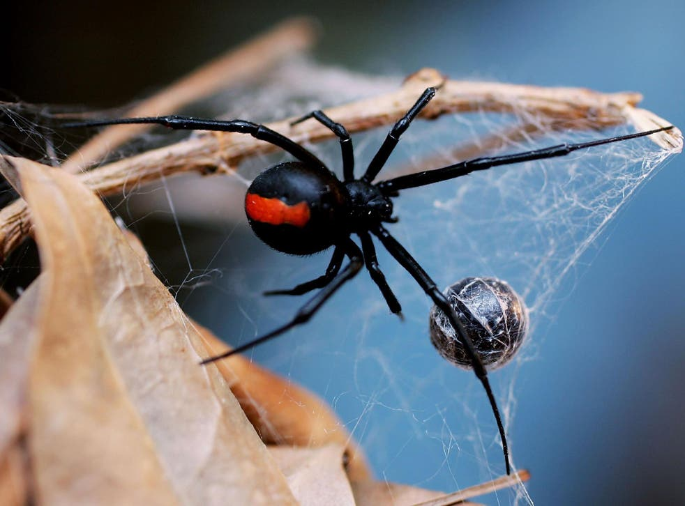 The report looked at the dietary habits of 65 spider types