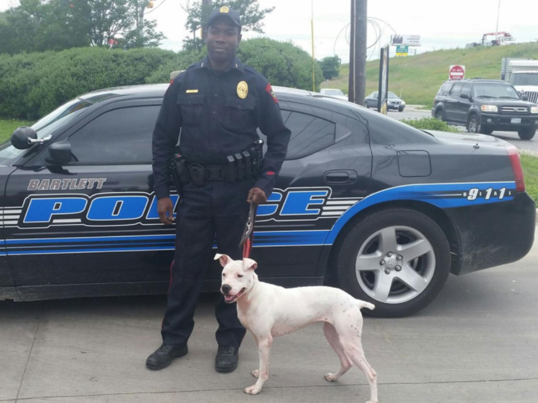 US police departments are training and adopting pit bulls