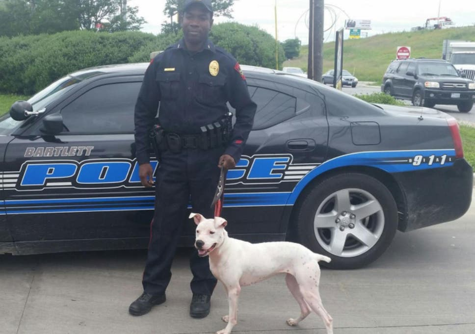 Us Police Departments Are Training And Adopting Pit Bulls Instead Of