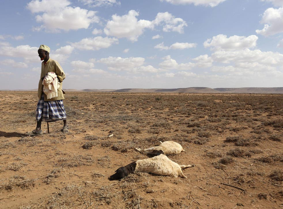 A man walks past the carcass of sheep that died during the El Nino-related drought in Marodijeex, Somaliland