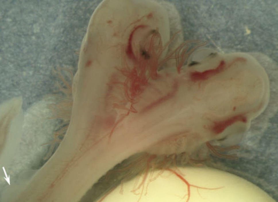 Two-headed shark found growing in a lab in Spain, potentially ...