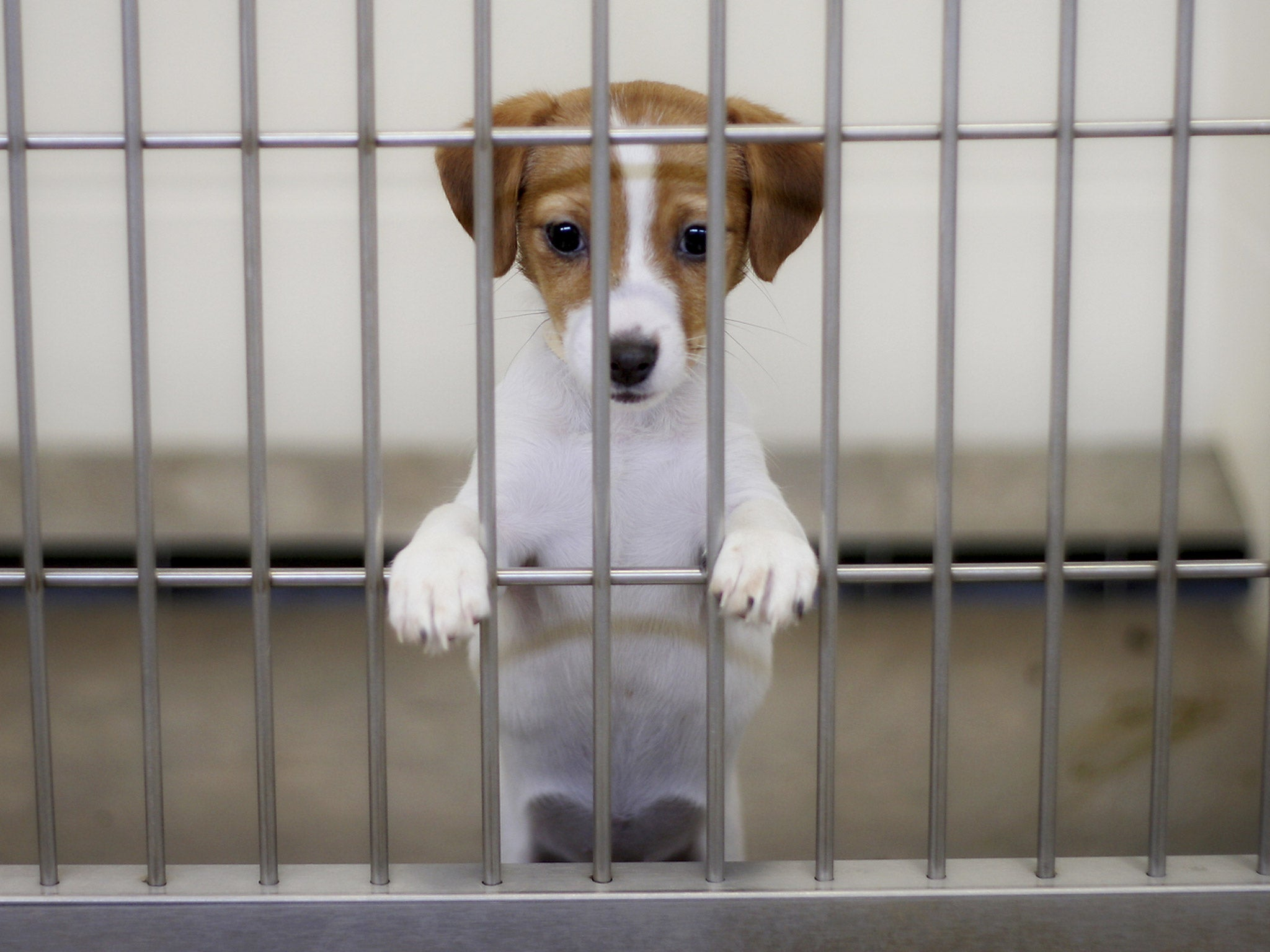 San Francisco passes law forcing all pet shops to only sell rescue