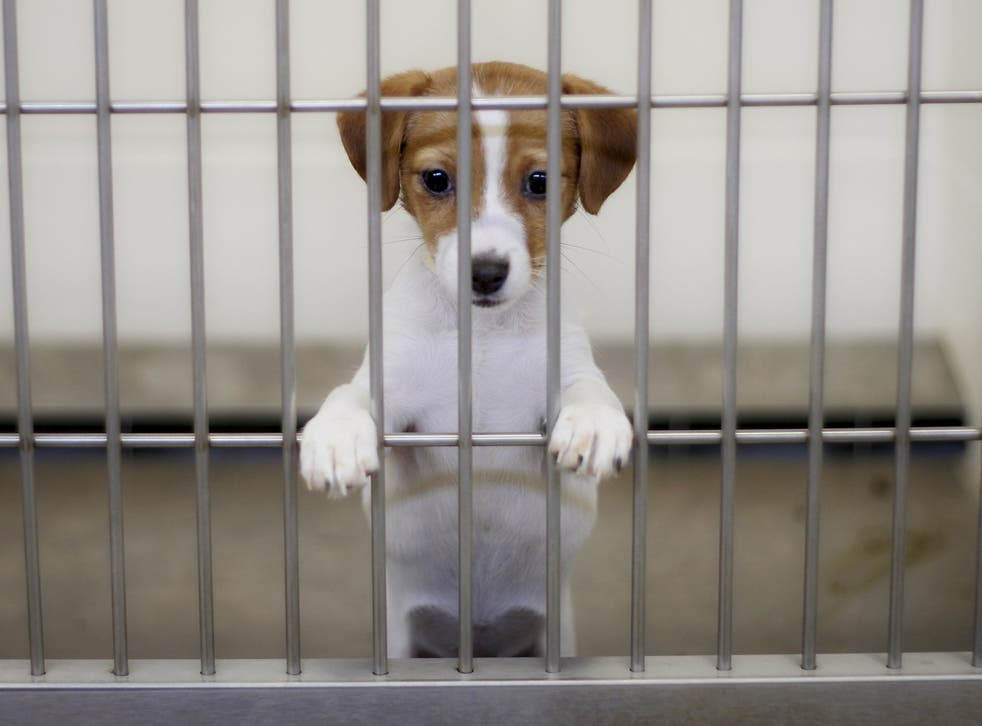 Less than 12 per cent of puppies in the UK are bred by licenced breeders, a recent study has found