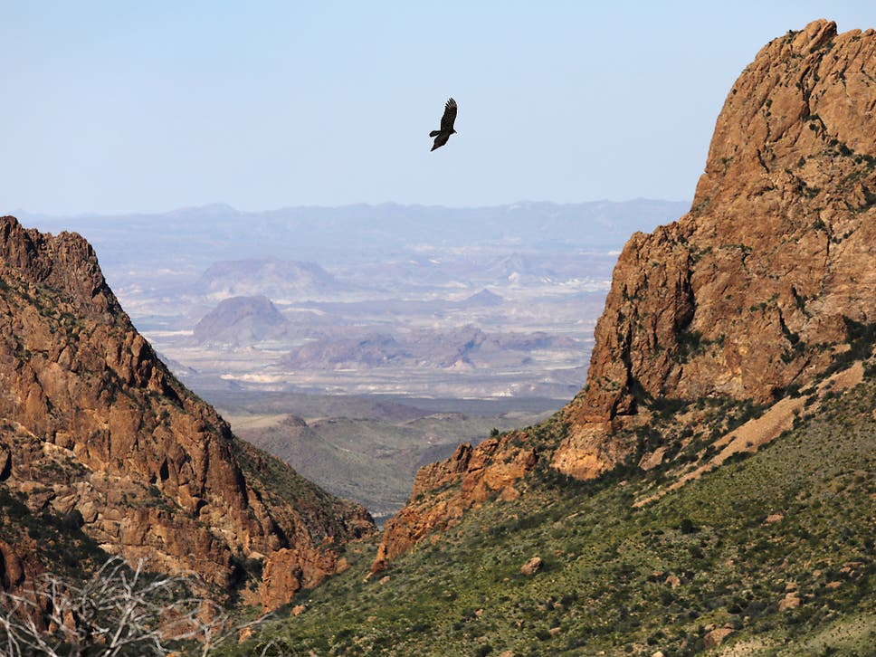 A Falcon Flies Over The Chisos Basin On October 16, 2016 In The Big Bend