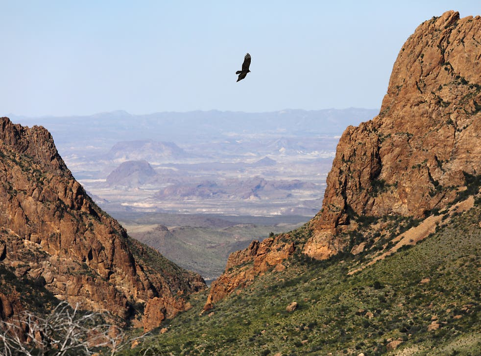 A falcon flies over the Chisos Basin on October 16, 2016 in the Big Bend National Park in West Texas