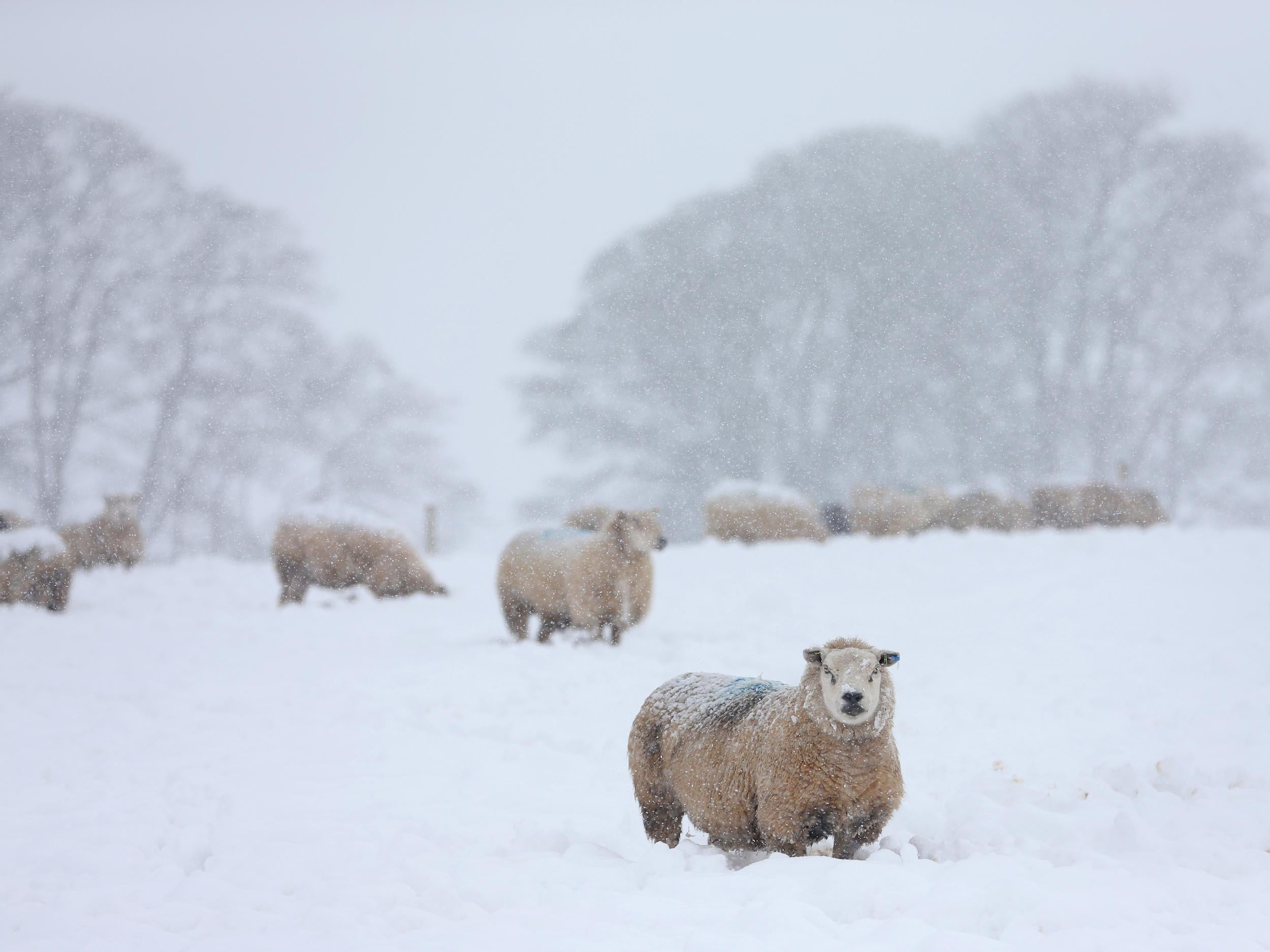 What Is A Polar Vortex Why The Uk Could See Its Coldest Winter In Years The Independent