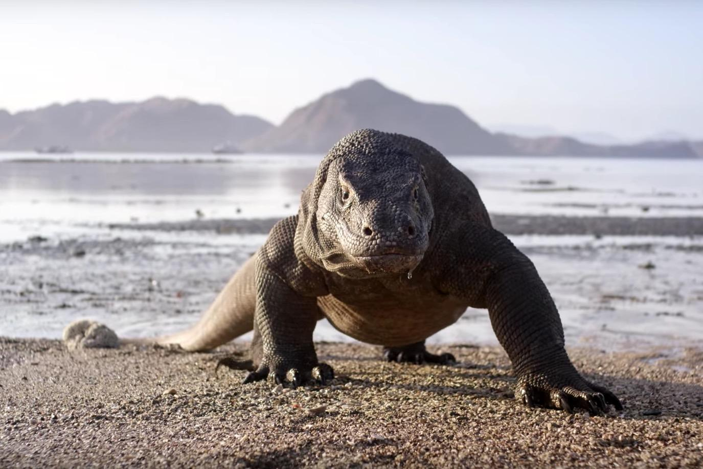 Planet Earth 2: Viewers complain about 'fake' sound effects despite